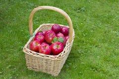 Apple Basket. Wicker basket full of red ripe Honeycrisp apples Royalty Free Stock Photos