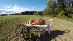 Apple baskets on old white table on autumn field and clouds. Timelapse 4K stock video