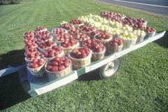 Apple baskets sitting on a trailer. By the roadside in Clermont, NY Royalty Free Stock Photography