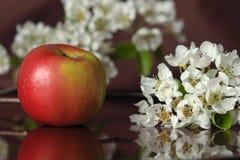 Apple-Baum Blumen Stockfotos