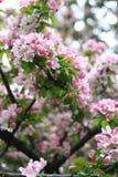 Apple-Baum in der Farbe Lizenzfreie Stockfotos