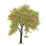 Apple-Baum mit Äpfeln im Sommer Lizenzfreie Stockfotos