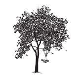 Apple-Baumschattenbild auf einem weißen Hintergrund Stockfoto