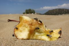 Apple on beach Royalty Free Stock Photography