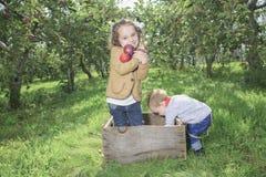 Apple on beautiful autumn Stock Images