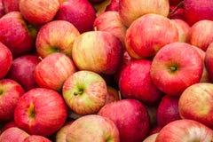 Apple-Behälter Lizenzfreies Stockbild