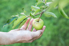 An apple being picked Royalty Free Stock Images