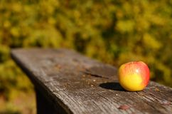 Apple on the bench,  on an autumn day Stock Image