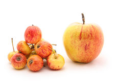 apple big small Arkivfoto