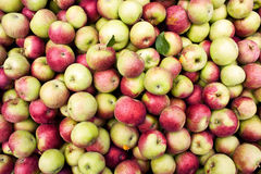 Apple bin. View from above of an apple bin Stock Photography