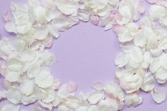 Apple blühen Blütenrückseite Stockfotografie