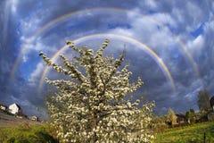 Apple blühen Wolkensturm Stockbild