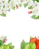 Apple blüht Blumenstraußrahmen Watercolouranordnung Stockfotografie