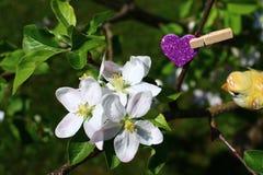 Apple-Blüten im Garten lizenzfreie stockfotografie