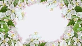 Apple-Blütenränder auf rosafarbenem Hintergrund Lizenzfreie Stockfotos