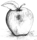 Apple Black and White Sketch. Pencil drawing sketch of an apple Stock Photos