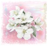 Apple-bloem Stock Afbeelding