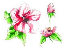 Apple-bloem in bloesem Royalty-vrije Stock Afbeelding