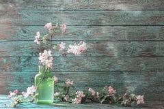 Apple-bloemen in groene glasvaas stock afbeelding