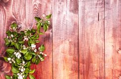 Apple-bloemen op houten achtergrond Royalty-vrije Stock Foto's