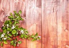 Apple-bloemen op houten achtergrond Stock Foto