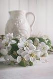 Apple-bloesembloemen met kruik op achtergrond Royalty-vrije Stock Afbeeldingen