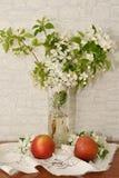 Apple blomning och Apple Royaltyfria Foton