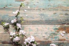 Apple blomning på gammal träbakgrund kopiera avstånd Royaltyfri Foto