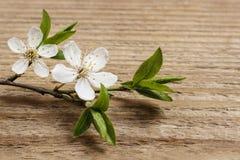 Apple blomning på träbakgrund Arkivbilder