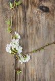 Apple blomning på träbakgrund Royaltyfri Foto