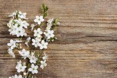 Apple blomning på träbakgrund Royaltyfria Foton