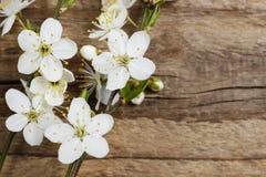 Apple blomning på träbakgrund Arkivfoton