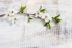 Apple blomning på träbakgrund Royaltyfri Bild