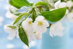 Apple blomning, vårblomningfilial på träbakgrund Arkivfoton