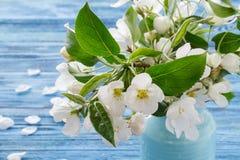 Apple blomning, vårblomningfilial på träbakgrund Fotografering för Bildbyråer