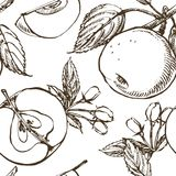 Apple blomningfilial som isoleras på vit Dragen illustration för tappning botanisk hand Vårblommor av äppleträdet Arkivbild