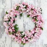 Apple blomningkrans Fotografering för Bildbyråer