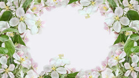 Apple blossom borders on pink background Royalty Free Stock Photos