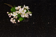 Apple blossom branches on Star Galaxy granite countertop Royalty Free Stock Photos