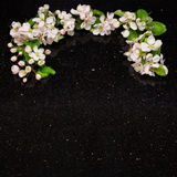 Apple blossom branches on Star Galaxy granite countertop. Apple blossom branches on Star Galaxy granite kitchen worktop Stock Photo