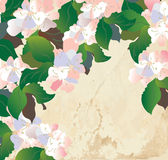 Apple blossom card with paper texture Stock Photography