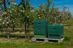 Apple blossom Royalty Free Stock Photos