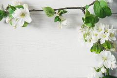 Apple blossom flowers. On wooden background Stock Photography