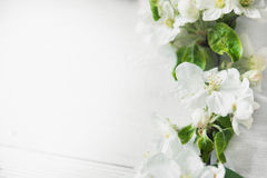 Apple blossom flowers. On wooden background Royalty Free Stock Photo