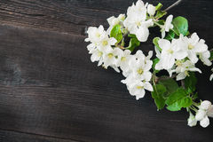 Apple blossom flowers. On wooden background Stock Photos