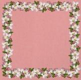 Apple blossom frame Stock Photos