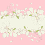Apple blossom frame background. Stock Images