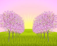 Apple blossom morning. Park way with blossoming apple trees on a field and at dawn sunrise vector illustration