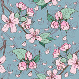 Apple blossom seamless pattern Royalty Free Stock Photos