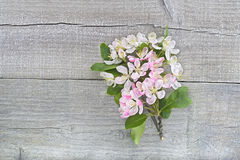 Apple blossom on wood Royalty Free Stock Image